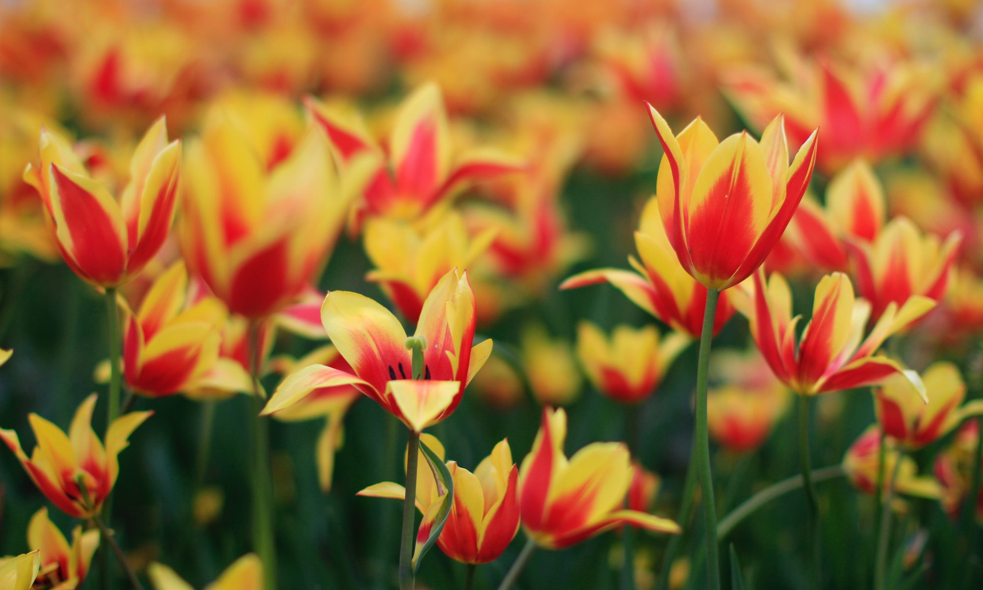 bright-color-easter-1060876